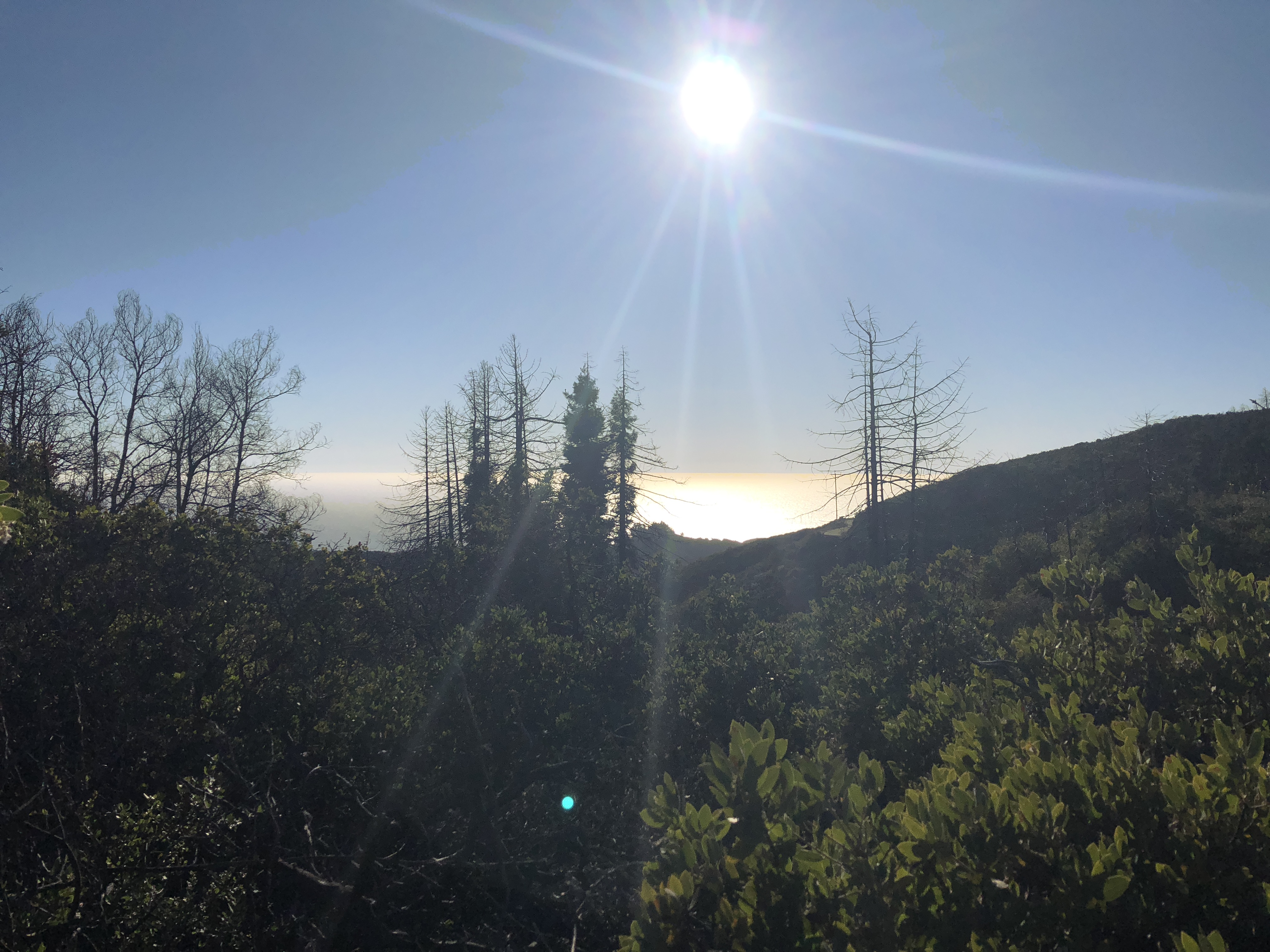 The view from Buzzard's Roost Trail