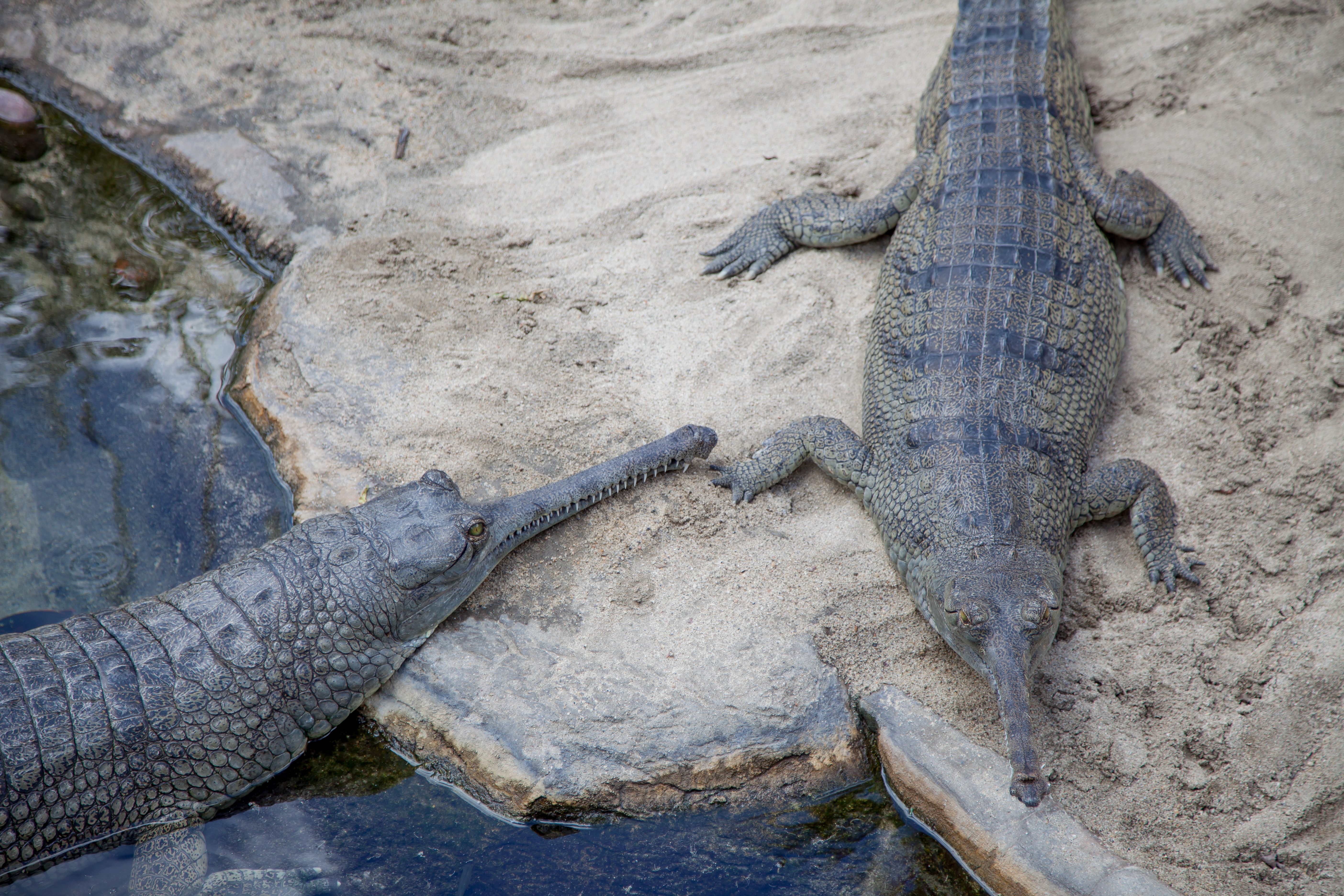 funny looking crocodiles