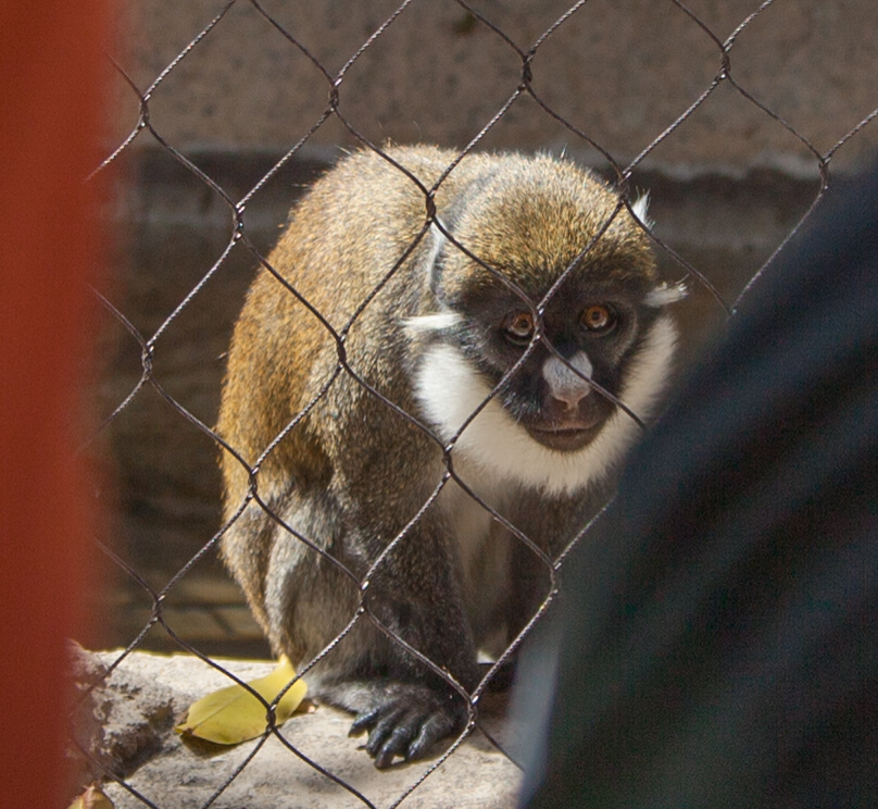 a scared-looking monkey