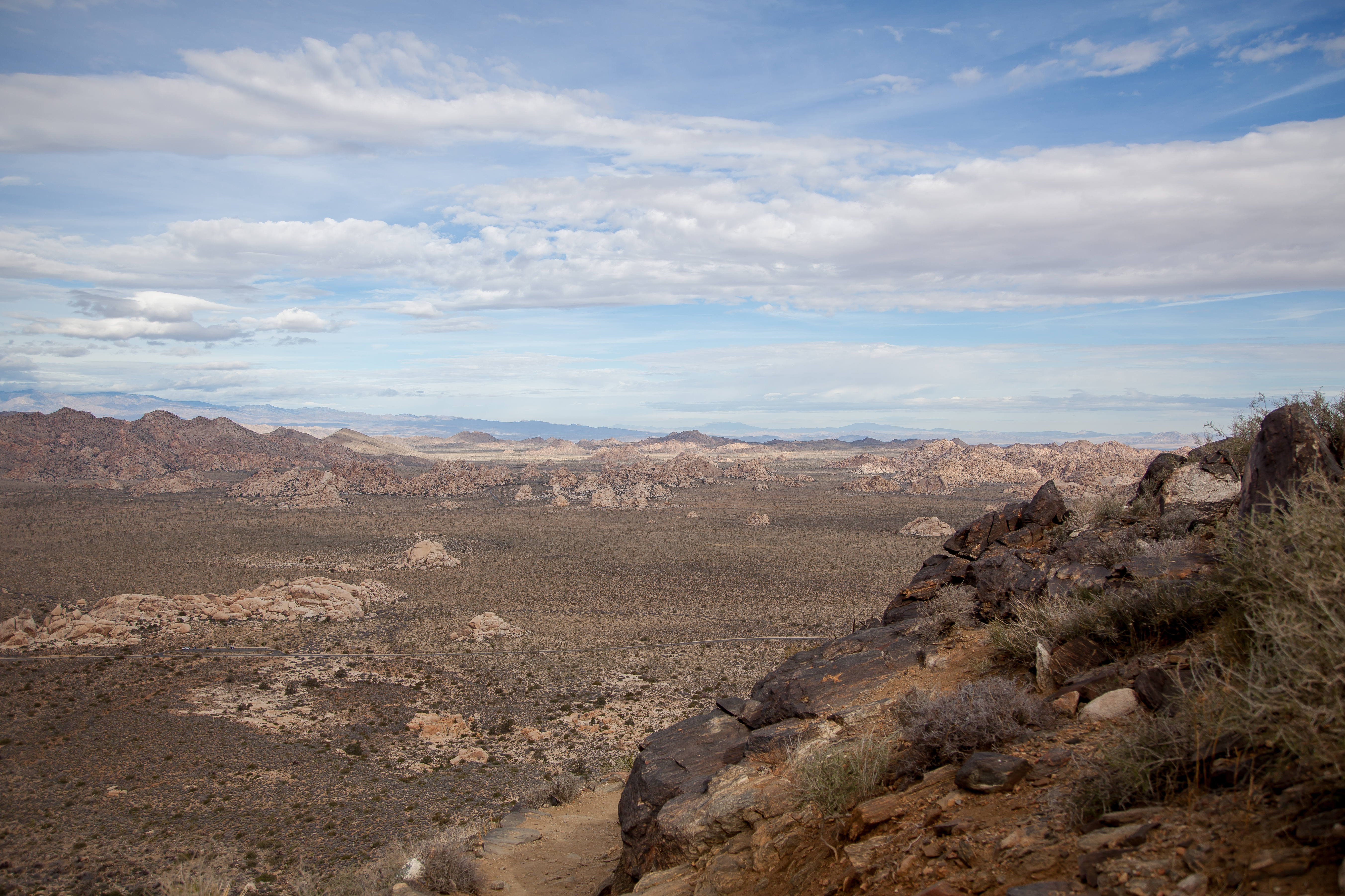 a view of the desert in Joshua Tree National Park