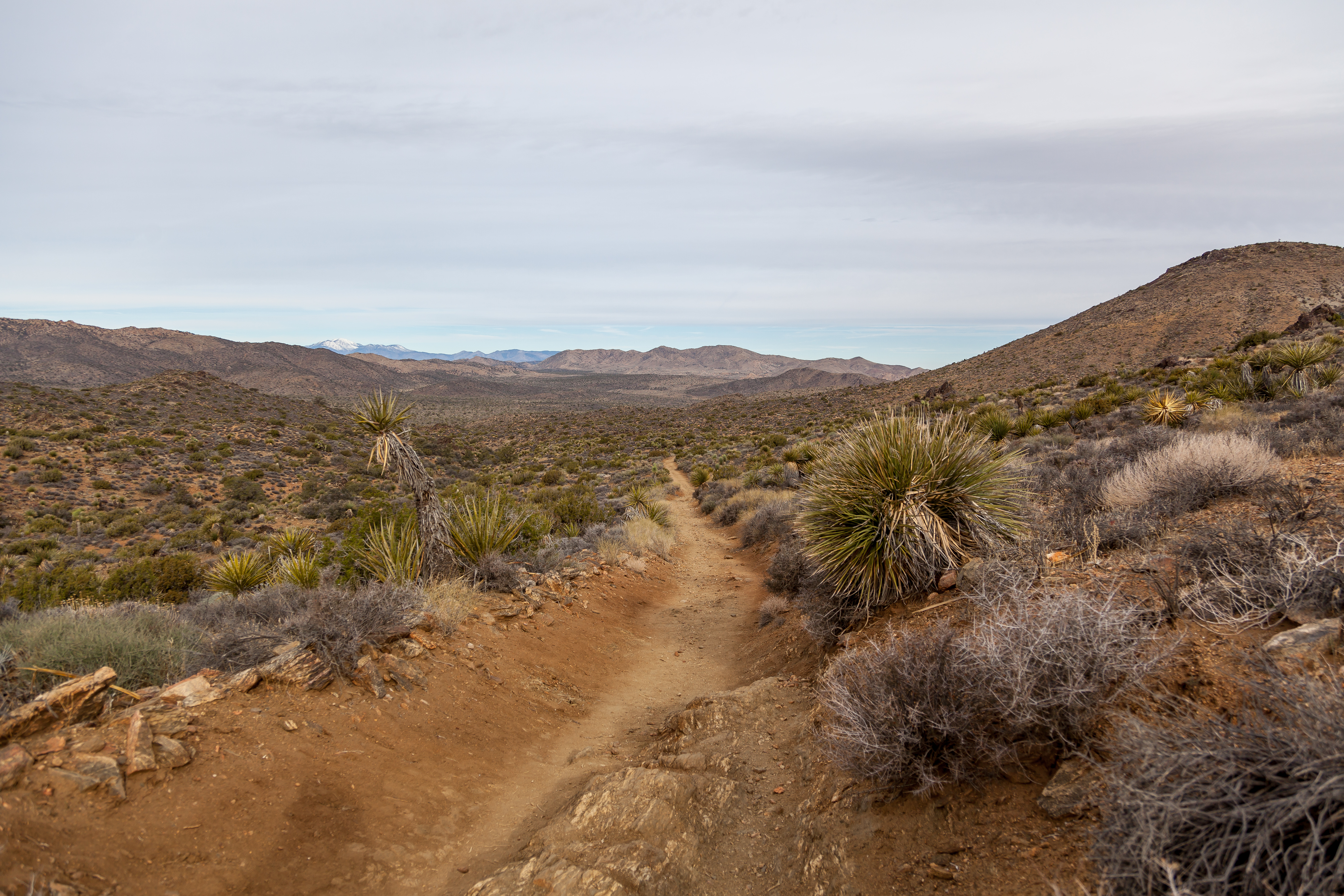 another trail in Joshua Tree National Park