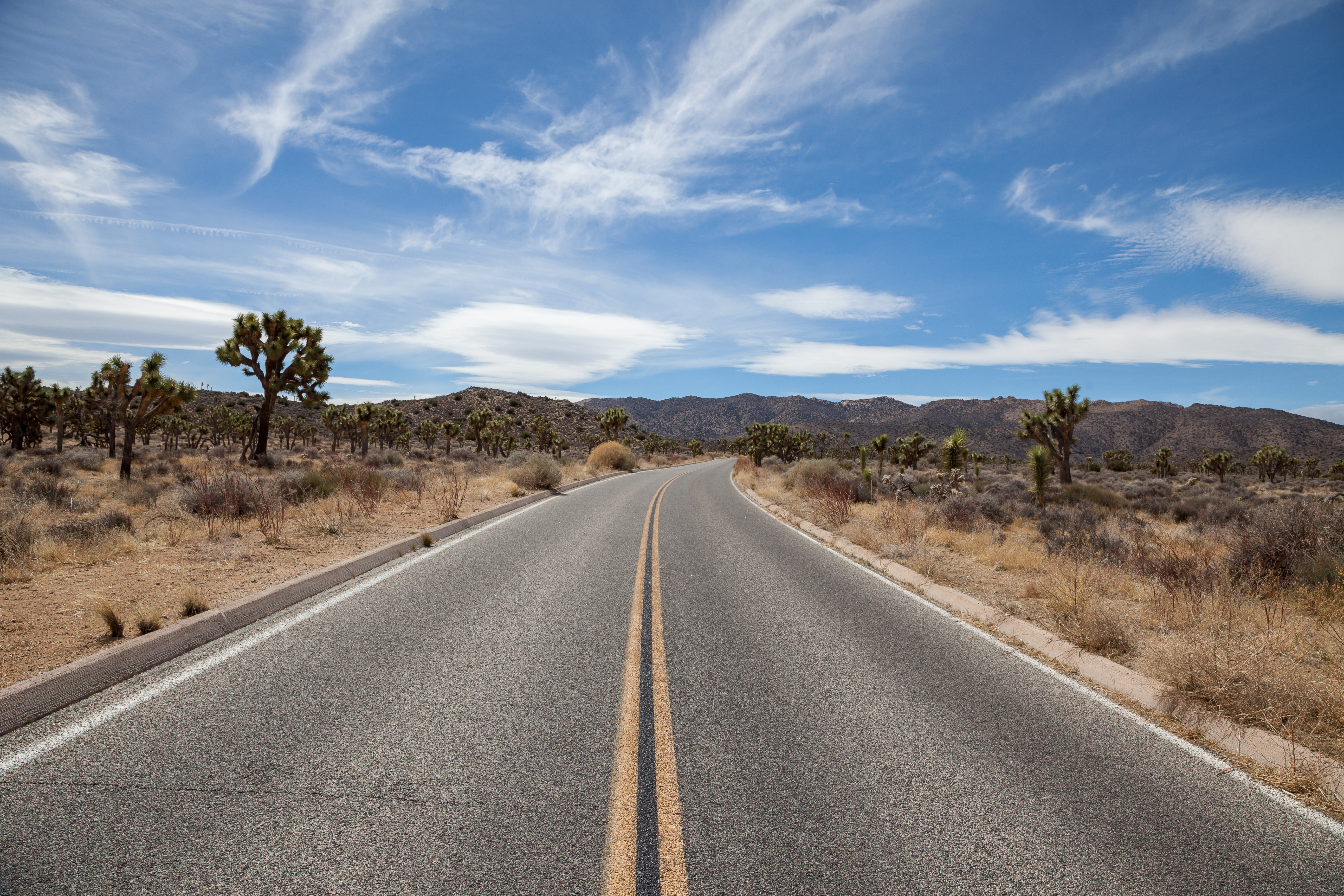 a road in Joshua Tree National Park