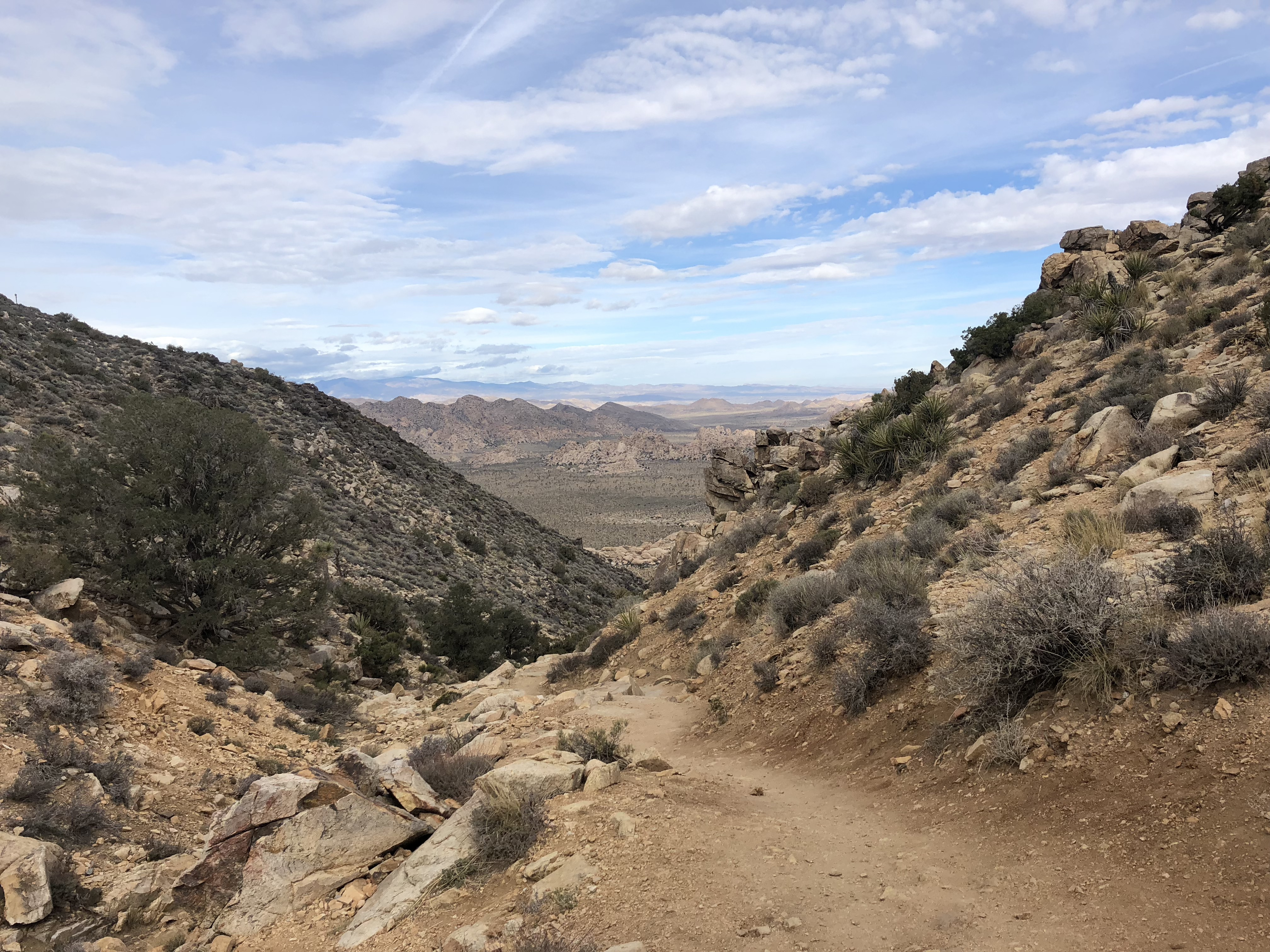 a trail in Joshua Tree National Park